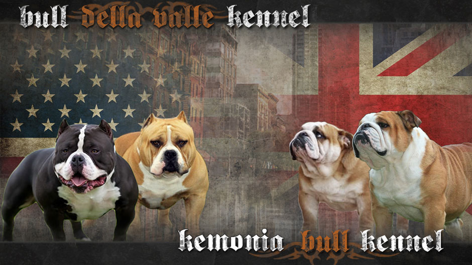 Bull della Valle Kennel & Kemonia bull Kennel