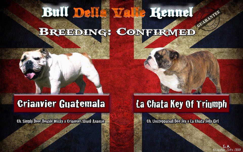 Breeding Crianvier Guatemala X la Chata Key Of Triunph
