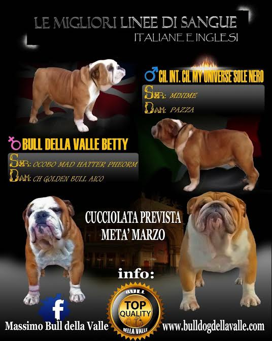 Ch. Int Ch. My Universe Sole Nero X Bull Della Valle Betty
