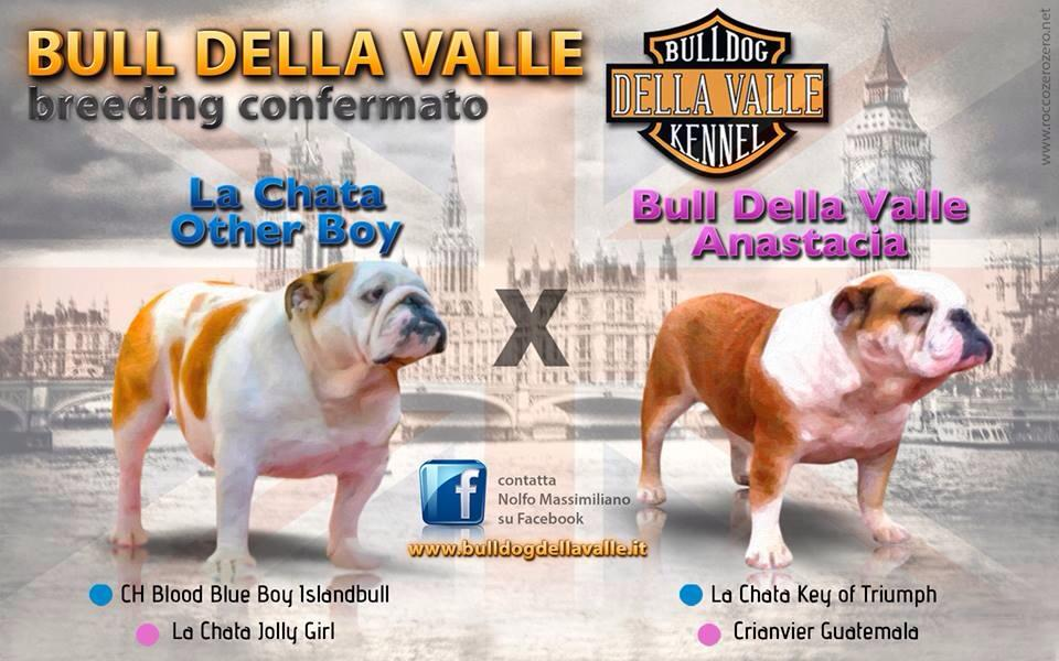 La Chata Other Boy xXx Bull Della Valle Anastacia
